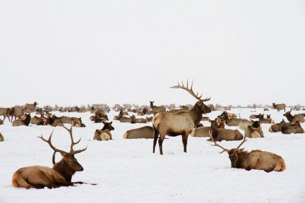 IMG 6880 Jackson Wyoming