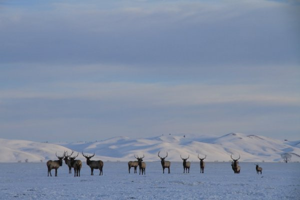 IMG 6879  Jackson Wyoming